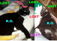"""Alive, Facebook, and Family: LOST  K.O.  LOST  LOST  LOS  Kno. UPDATE - Good News! :) Messaged by Steph Lacoste on April 23rd/2017 at 10:20PM: """"I guess he's a smart cat.. he did come home just now. :) Thank you!"""" ------------------------------------------------------- LOST ON GATEWAY CRESCENT SOUTH - Posted  by Steph Lacoste on Sunday, April 23rd/2017: - LOST - """"My Indoor Cat is missing. He goes by the name of 'K.O.'. He is a very large Black & White Tuxedo Cat, and he's very skiddish. K.O. is gone from Gateway Crescent area South, by Superstore. Please contact me if seen...he's very missed and loved very very much, and is Not an outside Cat!!!  Sad mama and kid over here."""" **PLEASE SHARE** (If you have any information about 'K.O.', please contact Steph at: 587-220-6569 or Email: Lacoste.steph1@Gmail.com or Message Steph at: https://www.facebook.com/steph.lacoste.37 or reply to her post here: https://www.facebook.com/groups/319930098103133/permalink/1306569102772556/ ) **Another Photo in Comments** https://www.facebook.com/photo.php?fbid=10155137596380429&set=o.323870260965049&type=3&permPage=1 -------------------------------------- Lethbridge Animal Services Lethbridge and District Humane Society No-Kill Animal Association (Lethbridge) Last Chance Cat Ranch Lethbridge Lethbridge PAW Society Purrfect Endings Rescue Society Family Pet Hospital & 24 Hour Pet Emergency Centre Chinook Pet Clinic Petland Lethbridge Homes Alive Pets Green Acres Animal Hospital Ranch Docs Veterinary Service Lethbridge Veterinary House Call Service Pet Valu South Lethbridge PetSmart"""