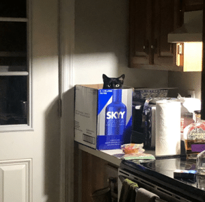 Lost my cat....never mind, found him.: Lost my cat....never mind, found him.