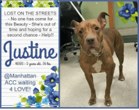 7/11, 9/11, and Alive: LOST ON THE STREETS  -No.one has come for  this Beauty She's out of  time and hoping for a  second chance Help!!  ustine  46503 3ueaold, 56 o  @Manhattan  ACC waiting  4 LOVE! **** TO BE KILLED - 11/9/2018 ****  FOUND ABANDONED, JUSTINE IS LABELED AS A STRAY but this beautiful girl comes from somewhere. She knew a home and loved a family recently. They just didn't share that same unconditional and loyal love we receive from our four-legged friends no matter what. :( Currently Justine resides at the Manhattan shelter for dogs and cats and it's there that she contracted this pesky shelter cold and cough that has her on their euth list. It doesn't matter that this cold is treatable, or that Justine was well behaved with the NYPD officers who picked her up off the street, or that she was social and sweet with the ACC staff. They are still going to kill her if no one comes for her soon. Unsure and nervous in a scary, unfamiliar place, Justine has been trying to protect herself the only way she knows how, doing some barking and posturing. It's a fear of the unfamiliar, the unknown. Justine is simply unsure, praying for something certain during these uncertain times. A chance!! Justine needs to get of the shelter alive - walk out of this cold place and into the warm arms and home of a loving new family.   JUSTINE@MANHATTAN ACC Hello, my name is Justine My animal id is #46503 I am a female brown dog at the  Manhattan Animal Care Center The shelter thinks I am about 3 years old, 56 lbs  Came into shelter as agency Nov. 4, 2018  Justine is rescue only   Justine is at risk for behavior and medical. She remains fearful in the care center environment allowing no interactions. We recommend she go to a new hope partner. Medically, she was diagnosed with canine infectious respiratory disease complex which will require rest and in home care.  My medical notes are... Weight: 56.8 lbs Vet Notes 7/11/2018 DVM Intake Exam Estimated age: 3y Microchip noted on Intake? no History : stray, found abandoned Subjective: BARH, unremarkable appetite and defecations Observed Behavior - was difficult to control in kennel, growled during assessment Evidence of Cruelty seen - no Evidence of Trauma seen - no Objective  T = -  P = WNL R = WNL BCS 5/9  EENT: Eyes clear, ears clean, no ocular discharge noted, serous nasal discharge Oral Exam: incisors normal, could not assess more due to muzzle PLN: No enlargements noted H/L: NSR, NMA, CRT < 2, Lungs clear, eupnic ABD: Non painful, no masses palpated U/G: female intact no spay scar noted MSI: Ambulatory x 4, skin free of parasites, no masses noted, healthy hair coat CNS: Mentation appropriate - no signs of neurologic abnormalities Rectal: Assessment CIRDC Dermatitis - unspecified Prognosis: good Plan: Doxycycline for 14 days 10 mg/kg po SID enrofloxacin for 14 days 10 mg/kg po SID cerenia for 4 days 1 mg/kg po SID fortiflora for 4 days recheck in 1 week SURGERY: Temporary waiver due to CIRDC 1619 9/11/2018  [Spay/Neuter Waiver - Upper Respiratory Illness]  Your newly adopted animal is in treatment for an upper respiratory illness. The veterinarian is temporarily waiving this animal from the spay/neuter requirements of the City of NY until such time as the illness has resolved and the pet has sufficiently recovered. At that time, this animal must come into compliance with the spay/neuter requirements.  Details on my behavior are... Behavior Condition: 3. Yellow Behavior History Behavior Assessment Upon intake, Justine allowed all handling, including taking a photograph, scanning for a microchip, collaring, and leading to kennel.  Date of Intake: 11/4/2018 Basic Information:: Justine came into our facilities as a stray intake via the NYPD. She is a brown large mixed breed female dog. She is approximately 3 years old. Previously lived with:: Unknown How is this dog around strangers?: Justine allowed all handling by NYPD as well as ACC staff. How is this dog around children?: Behavior is unknown. How is this dog around other dogs?: Behavior is unknown. How is this dog around cats?: Behavior is unknown. Resource guarding:: Behavior is unknown. Bite history:: Bite history is unknown. Housetrained:: Unknown Energy level/descriptors:: Unknown Other Notes:: Behavior is unknown. Medical Notes: Medical history is unknown. For a New Family to Know: Behavior is unknown. Date of intake:: 11/4/2018 Means of surrender (length of time in previous home):: Stray  Date of assessment:: 11/8/2018  Summary:: When her kennel is approached, Justine lunges forward, bearing teeth and snapping. She is unable to be removed from her kennel. For this reason, she is not a good candidate for a handling assessment at this time.  ENERGY LEVEL:: We have no history on Justine so we cannot be certain of her behavior in a home environment.  BEHAVIOR DETERMINATION:: NEW HOPE ONLY Behavior Asilomar: TM - Treatable-Manageable Recommendations:: No children (under 13),Place with a New Hope partner Recommendations comments:: No children: Due to how uncomfortable Justine is currently with touch and novel stimuli, we feel that an adult-only home would be most beneficial at this time. Place with a New Hope partner: Justine has not acclimated well to the kennel environment and has allowed only minimal handling since intake. We recommend placement with a New Hope partner who can provide any necessary behavior modification (force-free, positive reinforcement-based) and re-evaluate behavior in a stable home environment before placement into a permanent home. Potential challenges: : Fearful/potential for defensive aggression Potential challenges comments:: Fearful/potential for defensive aggression: In her kennel, Justine lunges, barks, and bares teeth when approached. She is unable to be safely removed from her kennel. Guidance from a professional trainer/behaviorist is recommended to assess behavior after decompression in a new home environment. Force-free, reward based training is advised when introducing or exposing Justine to new and unfamiliar situations.  JUSTINE IS RESCUE ONLY…..TO SAVE THIS PUP YOU MUST FILL OUT APPLICATIONS WITH AT LEAST 3 NEW HOPE RESCUES. PLEASE HURRY!!!   IF YOU CAN FOSTER OR ADOPT THIS PUP, PLEASE PM OUR PAGE FOR ASSISTANCE. WE CAN PROVIDE YOU WITH LINKS TO APPLICATIONS WITH NEW HOPE RESCUES WHO ARE CURRENTLY PULLING FROM THE NYC ACC.  PLEASE SHARE THIS DOG FOR A HOME TO SAVE HER LIFE.
