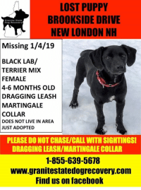 Facebook, Memes, and Lost: LOST PUPPY  BROOKSIDE DRIVE  NEW LONDON NH  Granite State  Dog Recovery  Missing 1/4/19  BLACK  LAB/  TERRIER MIX  FEMALE  4-6 MONTHS OLD  DRAGGING LEASH  MARTINGALE  COLLAR  DOES NOT LIVE IN AREA  JUST ADOPTED  PLEASE DO NOT CHASE/CALL WITH SIGHTINGSI  DRAGGING LEASH/MARTINGALE COLLAR  1-855-639-5678  www.granitestatedogrecovery.com  Find us on facebook URGENT MISSING 4-6 MONTH OLD PUPPY who is a black lab/terrier mix. in New London NH. This little one was just adopted and they stopped to let her potty and she pulled the leash from new owners hand and she bolted.  DRAGGING LEASH & WEARING MARTINGALE COLLAR.   PLEASE call 1-855-639-5678.
