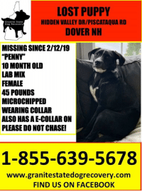 "Facebook, Memes, and Lost: LOST PUPPY  HIDDEN VALLEY DR/PISCATAQUA RD  DOVER NH  Granite State  Dog Recovery  MISSING SINCE 2/12/19  ""PENNY  10 MONTH OLD  LAB MIX  FEMALE  45 POUNDS  MICROCHIPPED  WEARING COLLAR  ALSO HAS AE-COLLAR ON  PLEASE DO NOT CHASE!  1-855-639-5678  www.granitestatedogrecovery.com  FIND US ON FACEBOOK Urgent Missing 10 month old puppy from Hidden Valley Drive & Piscataqua Road in Dovery NH.  Penny is a female who is 10 month old /female/45 pounds/shy/microchipped wearing a collar and e-collar.  PLEASE DO NOT CHASE/CALL 1-855-639-5678."