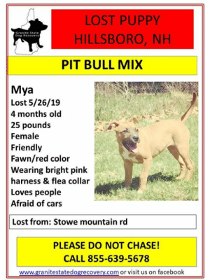 Cars, Facebook, and Memes: LOST PUPPY  HILLSBORO, NH  Dog Recover  PIT BULL MIX  Mya  Lost 5/26/19  4 months old  25 pounds  Female  Friendly  Fawn/red color  Wearing bright pink  harness & flea collar  Loves people  Afraid of cars  Lost from: Stowe mountain rd  PLEASE DO NOT CHASE!  CALL 855-639-5678  www.granitestatedogrecovery.com or visit us on facebook URGENT - LOST PUPPY - HILLSBORO, NH.  Mya went missing 5/26/19 from Stowe Mountain rd in Hillsboro, NH.  Mya is a female, 4 month old, 25 pound, fawn/red, pitbull mix.  She is friendly and loves people but is afraid of cars and loud noises.  She is wearing a bright pink harness and a flea collar.  Please keep your eyes open for this litle baby and call right away if seen.  855-639-5678