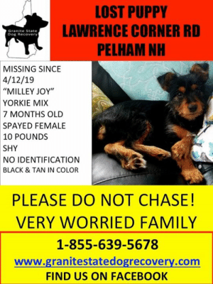 "Facebook, Family, and Memes: LOST PUPPY  LAWRENCE CORNER RD  PELHAM NH  Granite State  Dog Recovery  MISSING SINCE  4/12/19  ""MILLEY JOY',  YORKIE MIX  7 MONTHS OLD  SPAYED FEMALE  10 POUNDS  SHY  NO IDENTIFICATION  BLACK & TAN IN COLOR  PLEASE DO NOT CHASE!  VERY WORRIED FAMILY  1-855-639-5678  www.granitestatedogrecovery.com  FIND US ON FACEBOOK Still missing!"