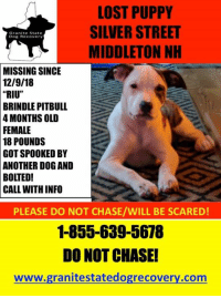 "Memes, Lost, and Pitbull: LOST PUPPY  SILVER STREET  MIDDLETON NH  Granite State  Dog Recovery  MISSING  SINCE  12/9/18  |  ""RIU""  BRINDLE  PITBULL  4 MONTHS OLD  FEMALE  18  POUNDS  GOT SPOOKED BY  ANOTHER DOG AND  BOLTED!  CALL WITH INFO  PLEASE DO NOT CHASE/WILL BE SCARED  1-855-639-5678  DO NOT CHASE!  www.granitestatedogrecovery.com PLease if you live in the area, check your barns and under your decks and sheds this little one is still missing from Middleton NH."