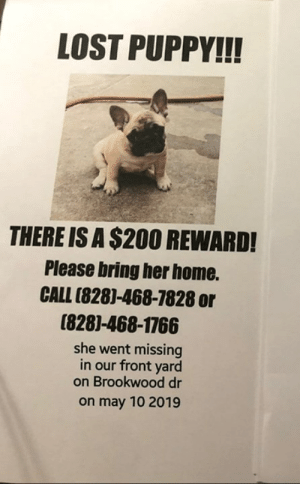 Memes, Soon..., and Lost: LOST PUPPY!!!  THERE IS A $200 REWARD!  Please bring her home.  CALL (8281-468-7828 or  (8281-468-1766  she went missing  in our front yard  on Brookwood dr  on may 10 2019 MAIDEN, NC (LINCOLN/CATAWBA CO.)-- LOST DOG  This happened in maiden nc please help share so she may get home to us soon