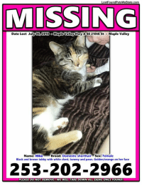 Click, Memes, and Sex: LostFoundPetsWaState.com  MISSING  Date Lost July06,2018 o Maple Valley Hwy &SE 218th St . Maple Valley  Name: NikoBreed: Domestic shorthair Sex: Female  Black and brown tabby with white chest, tummy and paws. Golden/orange on her face  253-202-2966  PLEASE DO NOT REMOVE! WE WILL TAKE DOWN ALL SIGNS ONCE FOUND! Missing Cat - Maple Valley, Wa  ☆Please Share!☆  For more information, please click here: https://lostfoundpetswastate.com/2018/07/16/missing-cat-maple-valley-wa-20/