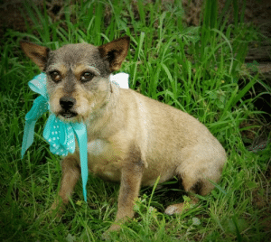 Lots of pets dolled up for Spring and looking for new families! Visit them at the Humane Society Adoption Center of Monroe.: Lots of pets dolled up for Spring and looking for new families! Visit them at the Humane Society Adoption Center of Monroe.
