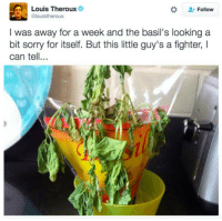 louis theroux: Louis Theroux  Follow  Glouistheroux  I was away for a week and the basil's looking a  bit sorry for itself. But this little guy's a fighter, I  can tell