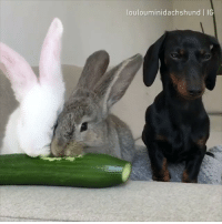 When your friends invite you for dinner but they didn't tell you that it's a vegan restaurant. - @loulouminidachshund - dachshund barked 9gag: loulouminidachshund IG When your friends invite you for dinner but they didn't tell you that it's a vegan restaurant. - @loulouminidachshund - dachshund barked 9gag