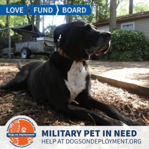 Cats, Dogs, and Love: LOVE  FUND  BOARD  boarding their pets  your troops by  MILITARY PET IN NEED  Dogs on Deployment  HELP AT DOGSONDEPLOYMENT.ORG  dosondeployment.ors  N  support LONG TERM: Sam is from #Raleigh #NC and needs a place to stay until August of 2020! He is good with other dogs, but is not a fan of cats.  Sam loves people and enjoys running around in the backyard! Can you help out?   Location: Raleigh, NC Date: June 27, 2019 - August 15, 2020  Pet's Name: Sam Breed: Pitbull Gender: Neutered Male Size: Extra Large (Greater than 66 lbs) Age: Adult (4-9 years)  Visit https://www.dogsondeployment.org/profile/57126 to learn more about us, register and contact our owner! (Must be registered and logged on to view all information!)