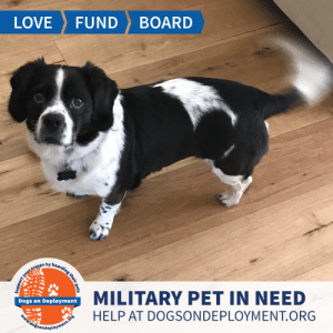 """Dogs, Love, and Memes: LOVE  FUND  BOARD  MILITARY PET IN NEED  Dogs on Deployment  HELP AT DOGSONDEPLOYMENT.ORG  dogsondeployment.ors  ort your troops by boarding their pets Annie is a """"spug"""" from #Encinitas #CA and would love to be your friend until August! She loves going on walks, snuggling,  and holding tennis balls! Annie isn't too big of a fan with other dogs or small kids, so a dog/kid-free home is best! Can you help out?   Location: Encinitas, CA Date: June 23, 2019 - August 5, 2019  Pet's Name: Annie Breed: Pug/Spaniel Mix Gender: Spayed Female Size: Medium (21-45lbs) Age: Adult (4-9 years)  Visit https://www.dogsondeployment.org/profile/56875 to learn more about us, register and contact our owner! (Must be registered and logged on to view all information!)"""