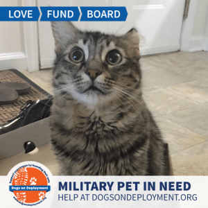 Cats, Dogs, and Energy: LOVE  FUND  BOARD  MILITARY PET IN NEED  Dogs on Deployment  HELP AT DOGSONDEPLOYMENT.ORG  doisondeployment.ors  ort your troops by boarding their pets LONG TERM: Lily is from #Georgia and needs a lap to lay on until June of 2020. She is very affectionate and gets along with low energy cats and dogs! Can you help?  Location: Columbus, GA Date: June 23, 2019 - June 23, 2020  Pet's Name: Lily Breed: Domestic Longhair Gender: Spayed Female Size: Small (under 20lbs) Age: Adolescent (1-4 years)  Visit https://www.dogsondeployment.org/profile/57371 to learn more about us, register and contact our owner! (Must be registered and logged on to view all information!)
