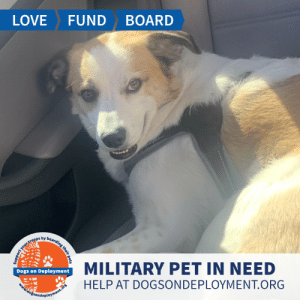 Chill, Dogs, and Energy: LOVE  FUND  BOARD  MILITARY PET IN NEED  Dogs on Deployment  HELP AT DOGSONDEPLOYMENT.ORG  dogsondeployment.ors  your troops by boaralng their pets Kai is from #SanDiego and needs a place to chill until August!  He is good with other dogs and kids - and is full of energy! Can you help Kai?   Location: San Diego, CA Date: June 23, 2019 - August 3, 2019  Pet's Name: Kai  Breed: Border Collie Gender: Neutered Male Size: Large (46-65 lbs) Age: Adolescent (1-4 years)  Visit https://www.dogsondeployment.org/profile/57457 to learn more about us, register and contact our owner! (Must be registered and logged on to view all information!)
