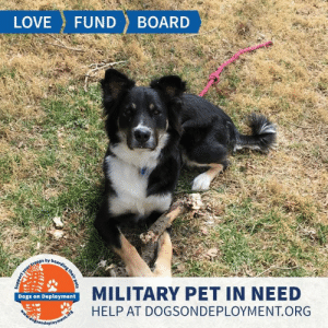 Cats, Dogs, and Love: LOVE  FUND  BOARD  MILITARY PET IN NEED  Dogs on Deployment  HELP AT DOGSONDEPLOYMENT.ORG  dosondeployment.ors  Support  your troops by b0araing their p Cooper is from #UpperMarlboro #MD and needs a place to hang out until the end of December. He is good with other dogs, but does not like cats or kids. Cooper is timid around strangers, but once he gets to know you he shows ALL the love! Can you help?  Location: Upper Marlboro, MD Date: July 4, 2019 - December 30, 2019  Pet's Name: Cooper Breed: German Shepherd Gender: Neutered Male Size: Extra Large (Greater than 66 lbs) Age: Adolescent (1-4 years)  Visit https://www.dogsondeployment.org/profile/57022 to learn more about us, register and contact our owner! (Must be registered and logged on to view all information!)