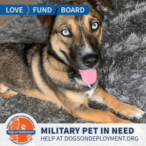 Cats, Dogs, and Love: LOVE  FUND  BOARD  MILITARY PET IN NEED  Dogs on Deployment  HELP AT DOGSONDEPLOYMENT.ORG  dosondeployment.ors  your troops by boarding their pets Who can say no to these eyes? Malo is from #KansasCity #MO and needs a boarder until September! He is good with other dogs, cats, kids, and loves to play fetch! Can you help out?  Location: Kansas City, MO Date: July 9, 2019 - September 9, 2019  Pet's Name: Malo Breed: Mix Gender: Neutered Male Size: Medium (21-45lbs) Age: Young (under 1 year)  Visit https://www.dogsondeployment.org/profile/57547 to learn more about us, register and contact our owner! (Must be registered and logged on to view all information!)