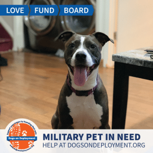 Cats, Dogs, and Lazy: LOVE  FUND  BOARD  MILITARY PET IN NEED  Dogs on Deployment  HELP AT DOGSONDEPLOYMENT.ORG  ogsondeployment.or  your troops by boarding their pets  fflyt, Mercedez is from #ColoradoSpings and needs a home to sleep in until November while her owner is away on orders. She can be lazy or energetic pending on your mood, and is good with other dogs, cats, and kids! Can you help?  Location: Colorado Springs , CO Date: July 7, 2019 - November 11, 2019  Pet's Name: Mercedez  Breed: American Staffordshire Terrier Gender: Spayed Female Size: Medium (21-45lbs) Age: Adolescent (1-4 years)  Visit https://www.dogsondeployment.org/profile/57513 to learn more about us, register and contact our owner! (Must be registered and logged on to view all information!)