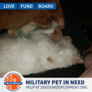 Cats, Dogs, and Family: LOVE  FUND  BOARD  MILITARY PET IN NEED  Dogs on Deployment  HELP AT DOGSONDEPLOYMENT.ORG  dosondment.ofs  ort your troops by boarding their pets Rascal needs a home to call his own for just a couple weeks! He is from #Augusta #GA -  and once he gets to know you  he becomes a member of the family. Rascal is good with other dogs and kids, but isn't a fan of cats. Can you help?   Location: Augusta, GA Date: July 11, 2019 - July 28, 2019  Pet's Name: Rascal Breed: Jack Russel Terrier Gender: Neutered Male Size: Medium (21-45lbs) Age: Adult (4-9 years)  Visit https://www.dogsondeployment.org/profile/57532 to learn more about us, register and contact our owner! (Must be registered and logged on to view all information!)