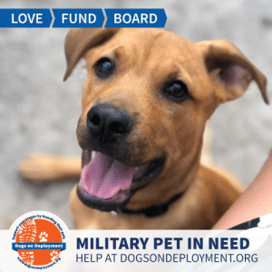 Dogs, Love, and Memes: LOVE  FUND  BOARD  MILITARY PET IN NEED  Dogs on Deployment  HELP AT DOGSONDEPLOYMENT.ORG  Midogsondeployment.ors  your troops by boarding their pets  efflYe, #USAF member looking for a #DoDBoarder during their upcoming deployment. Can you help?  Location: Tampa, FL Date: July 22, 2019 - January 22, 2020  Pet's Name: Saint Martinez  Breed: Unknown / Mixed Gender: Neutered Male Size: Medium (21-45lbs) Age: Young (under 1 year)  Visit https://www.dogsondeployment.org/profile/56124 to learn more about us, register and contact our owner! (Must be registered and logged on to view all information!)