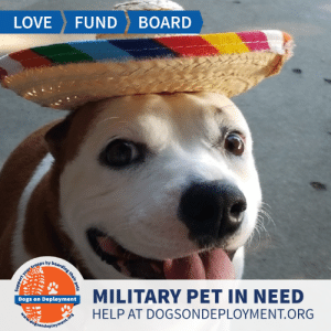 Dogs, Life, and Love: LOVE  FUND  BOARD  MILITARY PET IN NEED  Dogs on Deployment  HELP AT DOGSONDEPLOYMENT.ORG  dožsondeployment.ors  your troops by boarding their pets Life isn't always easy for military members; and life isn't always easy for #PitBulls. This adorable pup needs a #DoDBoarder while her #USAF parent deploys. Can you help?   Location: San Bernardino, CA Date: July 15, 2019 - December 15, 2019  Pet's Name: Sasha  Breed: American Staffordshire Terrier Gender: Spayed Female Size: Medium (21-45lbs) Age: Adolescent (1-4 years)  Visit https://www.dogsondeployment.org/profile/48393 to learn more about us, register and contact our owner! (Must be registered and logged on to view all information!)