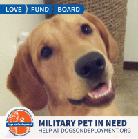 Click, Dogs, and Food: LOVE FUND BOARD  ops by  MILITARY PET IN NEED  HELP AT DOGSONDEPLOYMENT.ORG  Dogs on Deployment  sonde Yo! Any #GoldenRetriever lovers out there? We have an opportunity for you to house *the cutest* pup! Gunner is a super friendly buy who is on grain-free food! He is good with other dogs and knows basic commands. Who  is going to help this guy out for a couple months?  Siblings: Abbey (Click the link at the bottom of the post to view)  Location: Panama City Beach, FL Date: January 12, 2019 - March 5, 2019   Pet's Name: Gunner Breed: Golden Retriever Gender: Unaltered Male* Size: Large (46-65 lbs) Age: Adult (4-9 years)  *Speak to owner about having Gunner neutered before deployment  Visit https://www.dogsondeployment.org/profile/52571 to learn more about us, register and contact our owner! (Must be registered and logged on to view all information!)
