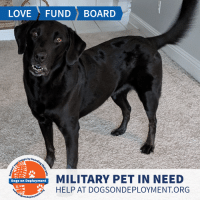 Click, Dogs, and Love: LOVE FUNDBOARD  ps by b  MILITARY PET IN NEED  HELP AT DOGSONDEPLOYMENT.ORG  Dogs on Deployment Abbey is a sweet and loyal dog who needs a home for a couple months!  She is good with most dogs, but has shown some minor aggression towards other female dogs. Her and her brother Gunner are a package deal - Hopefully they can find a boarder together! Can you help?  Siblings: Gunner (Click the link at the bottom of the post to view)  Location: Panama City Beach, FL Date: January 12, 2019 - March 5, 2019  Pet's Name: Abbey Breed: Labrador Retriever Gender: Spayed Female Size: Large (46-65 lbs) Age: Adult (4-9 years)  Visit https://www.dogsondeployment.org/profile/52571 to learn more about us, register and contact our owner! (Must be registered and logged on to view all information!)