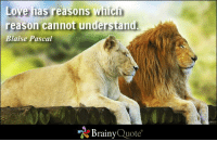 Animals, Love, and Memes: Love has reasons whic  reason cannot understand  Blaise Pascal  Brainy  Quote Love has reasons which reason cannot understand. - Blaise Pascal http://www.brainyquote.com/quotes/authors/b/blaise_pascal.html #brainyquote #QOTD #love #animals #lions