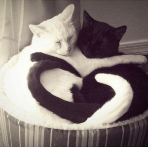 Love, Black, and Black and White: Love in black and white!!!!!