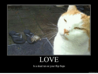 For more cute pics LIKE us at The Purrfect Feline Page: LOVE  Is a dead rat on your flip flops  guidonmeme com For more cute pics LIKE us at The Purrfect Feline Page