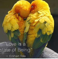 "Via @peace_love_light 😊 . ""Love is a state of Being"" Your love is not outside; it is deep within you. You can never lose it, and it cannot leave you. It is not dependent on some other body, some external form. In the stillness of your presence, you can feel your own formless and timeless reality as the unmanifested life that animates your physical form. You can then feel the same life deep within every other human and every other creature. You look beyond the veil of form and separation. This is the realization of oneness. This is love."" – Eckhart Tolle, The Power of Now. loveandlight awakespiritual oneness: ""Love is a  state of Being  -Eckhart Tolle  fr  eckhan Via @peace_love_light 😊 . ""Love is a state of Being"" Your love is not outside; it is deep within you. You can never lose it, and it cannot leave you. It is not dependent on some other body, some external form. In the stillness of your presence, you can feel your own formless and timeless reality as the unmanifested life that animates your physical form. You can then feel the same life deep within every other human and every other creature. You look beyond the veil of form and separation. This is the realization of oneness. This is love."" – Eckhart Tolle, The Power of Now. loveandlight awakespiritual oneness"