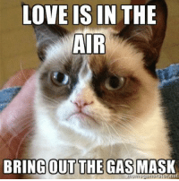 join Grumpy Cat. for more ( :  Animal Memes.: LOVE IS IN THE  AIR  BRING OUT THE GAS MASK join Grumpy Cat. for more ( :  Animal Memes.