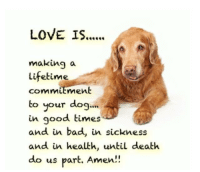 Bad, Love, and Memes: LOVE IS.  making a  Lifetime  commit  to your dog...  in good times  and in bad, in sickness  and in health, until death  do us part. Amen!!  ment  tLS Love is ............ And on this note we saying goodnight, sweet dreams and see you in the morning