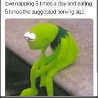 Funny, Love, and Day: love napping 3 times a day and eating  5 times the suggested serving size. 👀