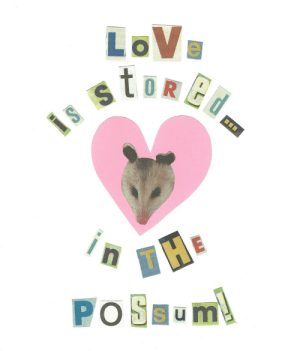 unclefather: What part of the woman is the possum : LoVe unclefather: What part of the woman is the possum