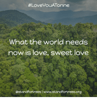 Memes, 🤖, and Forest:  #Love You Tonne  What the world needs  now is love, sweet love  ostandfortreeslwww.standfortrees.org Happy Valentine's Day! <3 Help us show the world some much needed love by protecting a threatened forest in the name of your Valentine. http:-bit.ly-1Qu9kng LoveYouATonne