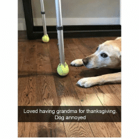 Cute, Dogs, and Grandma: Loved having grandma for thanksgiving  Dog annoyed Can you imagine the agony for this pupper? Check out @x__social_butterfly__x for more cute dogs.