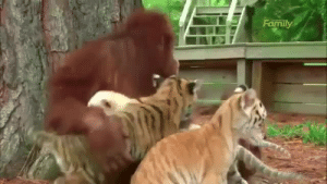 """Baby Daddy, Cute, and Fucking: lovelykouga: weloveshortvideos:  When you not the baby daddy but you take care of the kids anyway   I was literally screaming """"OH NOOOOO"""" the entire time I was watching this because it was just too cute to even be fucking real"""