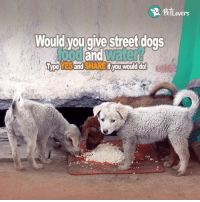 Dogs, Food, and Memes: Lovers  Would you give street dogs  food an  water  YES and SHARE  if you would do!  Type Type YES and SHARE if you would do!  Like Pet Lovers!