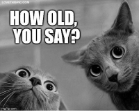 Old, How, and Com: LOVETHISPICCOM  HOW OLD,  YOU SAY?  imgflip.com How old, you say?
