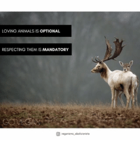 LOVING ANIMALS IS OPTIONAL  RESPECTING THEM IS MANDATORY  abolicionisto New poster by @veganismo_abolicionista 🍃 ・・・ Amar a los animales es opcional. Respetarlos es obligatorio. Hazte vegana-o. . . . This account is not associated with Gary Francione, but it is fully committed to his Abolitionist Approach theory. For more information on veganism and the Abolitionist Approach, please follow @gary.francione . . . animals animallover love animals amor respeto veganismo vegansofig vegansofspain frases frasesveganas vegan veganism animalrights cats dogs cat govegan nature naturelover naturaleza veganismo veganismoabolicionista enfoqueabolicionista abolicion abolition wild freedom naturelovers picoftheday instagood veganquotes
