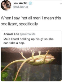 not all men: Low Arctic  @tulukaruq  When l say 'not all men' I mean this  one lizard, specifically  Animal Life @animallife  Male lizard holding up his gf so she  can take a nap.
