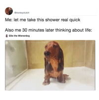 Life, Memes, and Shower: @lowkeyclutch  Me: let me take this shower real quick  Also me 30 minutes later thinking about life:  Ellie the Wienerdog wow me as heck (@lowkeyclutch on Twitter)