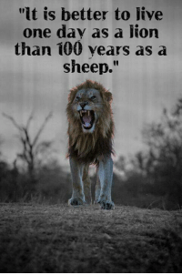 """Anaconda, Memes, and Lions: """"lt is better to Jive  one day as a liorn  than 100 years as a  sheep."""" For centuries there were two classes of people. The controllers and the controlled. The left wants nothing more than to return the USA to such a system. NOT ON THIS LIONS WATCH!  --  Cold Dead Hands Gear & Apparel: CDH2A.COM/STORE"""