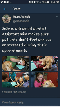 "<p><a href=""https://doggos-with-jobs.tumblr.com/post/175242714595/dentists-helper-doggy"" class=""tumblr_blog"">doggos-with-jobs</a>:</p><blockquote><p>Dentist's helper doggy</p></blockquote>: LTE.al 90%  10:47 AM  Tweet  Baby Animals  @RBAnimals  JoJo is a trained dentist  assistant who makes sure  patients don't feel anxious  or stressed during their  aקקointments  Tueet your reply <p><a href=""https://doggos-with-jobs.tumblr.com/post/175242714595/dentists-helper-doggy"" class=""tumblr_blog"">doggos-with-jobs</a>:</p><blockquote><p>Dentist's helper doggy</p></blockquote>"