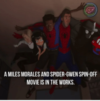 |- What's your guys thoughts on this?🤔 -|: LTF  A MILES MORALES AND SPIDER-GWEN SPIN-OFF  MOVIE IS IN THE WORKS |- What's your guys thoughts on this?🤔 -|