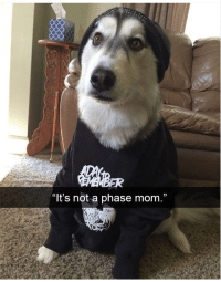 "30 Of The Most Hilarious Animal Pictures That Will Make Your Day: ""lt's not a phase mom,"" 30 Of The Most Hilarious Animal Pictures That Will Make Your Day"
