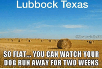 Memes, Run, and Texas: Lubbock Texas  SO FLAT. YOU CAN WATCH YOUR  DOG RUN AWAY FOR TWO WEEKS For more great pics LIKE us at The Purrfect Feline Page