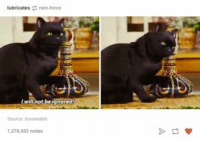 Ignorant, Humans of Tumblr, and Ignorance: lubricates Crain-orce  will not be ignored  1,278,493 notes