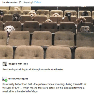 https://t.co/EqdPWmY5R5: lucidaquarian bby-virgo Follow  doggos-with-jobs  Service dogs training to sit through a movie at a theater.  driftwooddragons  It's actually better than that - the picture comes from dogs being trained to sit  through a PLAY... which means there are actors on the stage performing a  musical for a theatre full of dogs https://t.co/EqdPWmY5R5