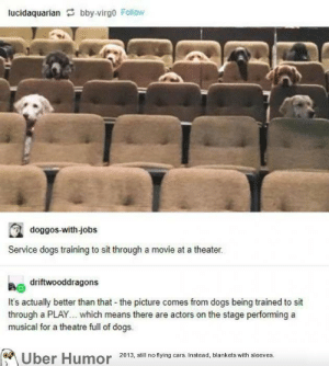 failnation:  they're good students!: lucidaquarian bby-virgo Follow  doggos-with-jobs  Service dogs training to sit through a movie at a theater.  driftwooddragons  It's actually better than that the picture comes from dogs being trained to sit  through a PLAY... which means there are actors on the stage performing a  musical for a theatre full of dogs.  Uber Humor 2013, still no flying cars. Instead, blankets with sleeves. failnation:  they're good students!