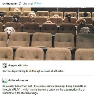 they're good students! via /r/wholesomememes https://ift.tt/354qyqq: lucidaquarian bby-virgo Follow  doggos-with-jobs  Service dogs training to sit through a movie at a theater.  driftwooddragons  It's actually better than that - the picture comes from dogs being trained to sit  through a PLAY... which means there are actors on the stage performing a  musical for a theatre full of dogs. they're good students! via /r/wholesomememes https://ift.tt/354qyqq